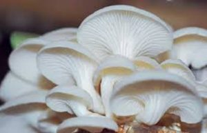 resep jamur krispi, resep jamur krispi renyah, resep jamur crispy tepung sajiku, resep jamur krispi tepung terigu