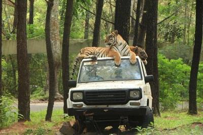 Taman Safari Indonesia Harga Tiket Masuk Taman Safari Prigen Foto