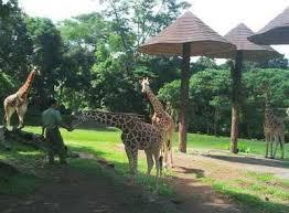 taman-safari-prigen,harga tiket masuk taman safari prigen,foto koleksi hewan di taman safari Prigen, alamat taman safari Prigen, Lokasi taman safari Prigen