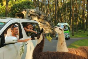taman-safari-prigen,foto taman safari prigen, koleksi hewan taman safari prigen. sakinahbersamamu.com