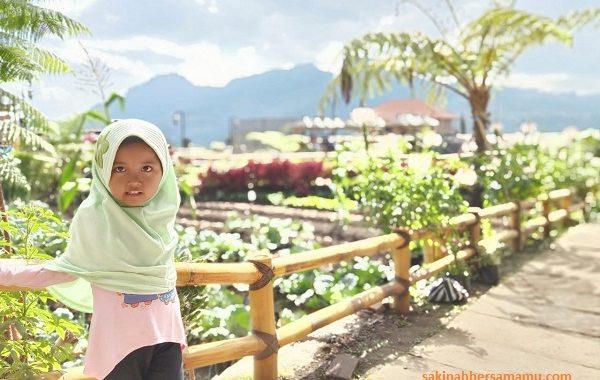 cafe sawah pujon 2019,cafe sawah pujon batu malang,cafe sawah pujon kidul