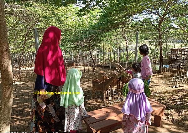 wisata kediri kebun binatang
