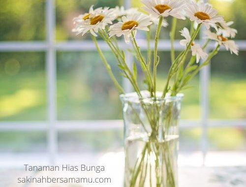 Tanaman Hias Bunga sakinahbersamamu.com