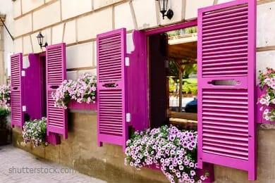 tanaman hias gantung, tanaman hias ungu, tanaman hias murah, pusat tanaman hias surabaya, jual tanaman hias murah