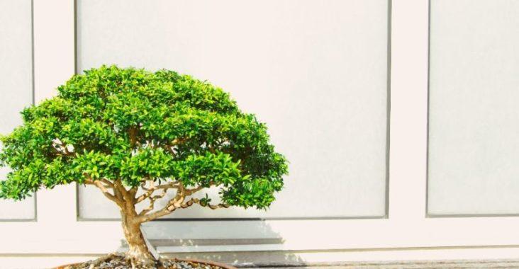 tanaman hias, tanaman hias daun, tanaman hias gantung, tanaman hias indoor, tanaman hias adalah,tanaman hias gantung, tanaman hias bunga, tanaman hias indoor, tanaman hias, tanaman hias murah, tanaman hias anggrek