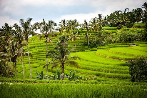 gambar pemandangan desa, gambar pemandangan asri, gambar pemandangan lingkungan hijau
