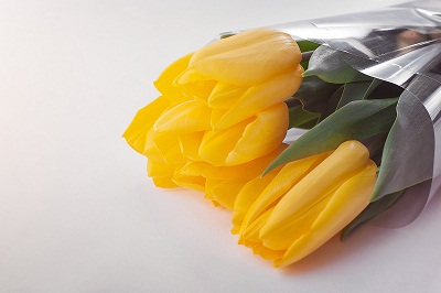 gambar bunga tulip kartun,gambar bunga tulip hitam putih,gambar bunga tulip asli,gambar bunga tulip sketsa,gambar bunga tulip warna biru,gambar bunga tulip berwarna,gambar bunga tulip putih