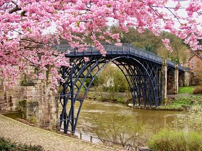 gambar bunga sakura kartun,gambar bunga sakura sketsa,gambar bunga sakura animasi,gambar bunga sakura asli,gambar bunga sakura hitam putih