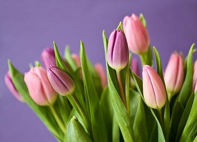 gambar bunga tulip clipart,gambar bunga lili cantik,gambar bunga tulip dengan cat air,gambar bunga calla lily,contoh gambar bunga tulip,cara gambar bunga tulip