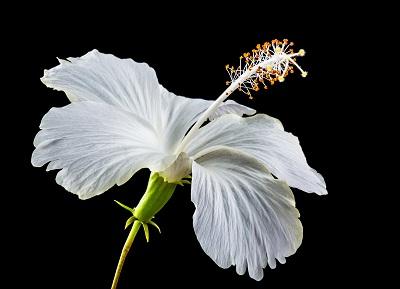 ,gambar bunga sepatu lukisan,gambar bunga sepatu animasi,gambar bunga sepatu sketsa,gambar bunga sepatu beserta bagiannya dan fungsinya