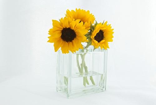 gambar bunga matahari kartun,gambar bunga matahari,sketsa gambar bunga matahari hitam putih,gambar bunga matahari animasi,gambar bunga matahari anak tk,gambar bunga matahari untuk diwarnai,gambar bunga matahari dari kain flanel,gambar bunga matahari untuk kolase,gambar bunga matahari asli