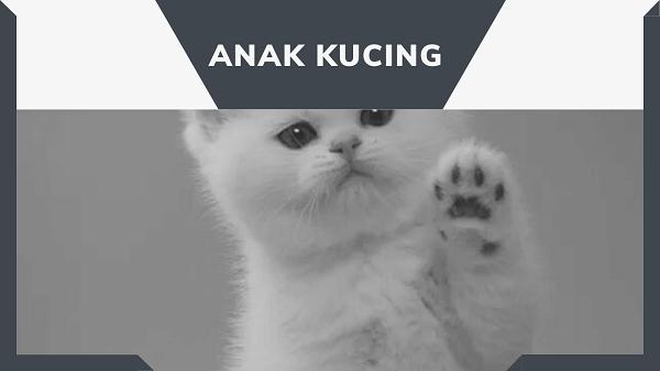 anak-kucing, gambar anak kucing, cara merawat anak kucing, cara memberi susu anak kucing,