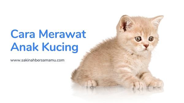anak-kucing lucu, gambar anak kucing, cara merawat anak kucing, cara memberi susu anak kucing,